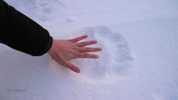 Maia's hand in Polar Bear Track, Dec 22, 2012_n