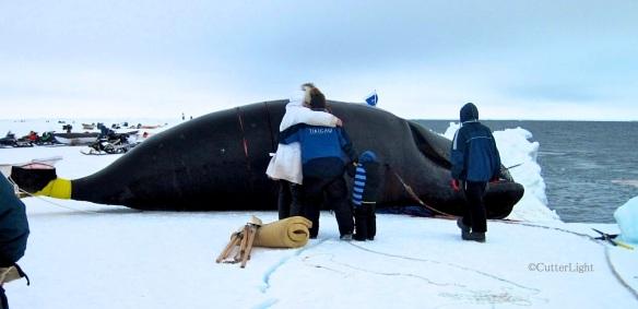 Whale 1_n