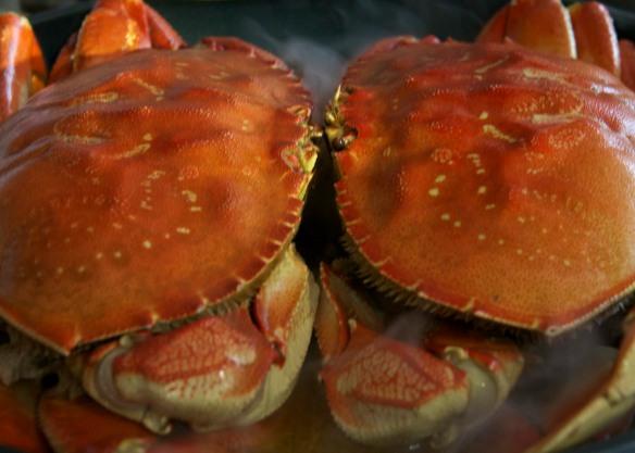 crabs honeymoon clase d800