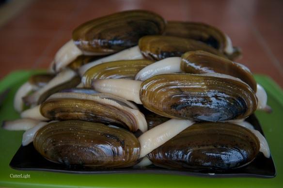 razor clams 30 a_n