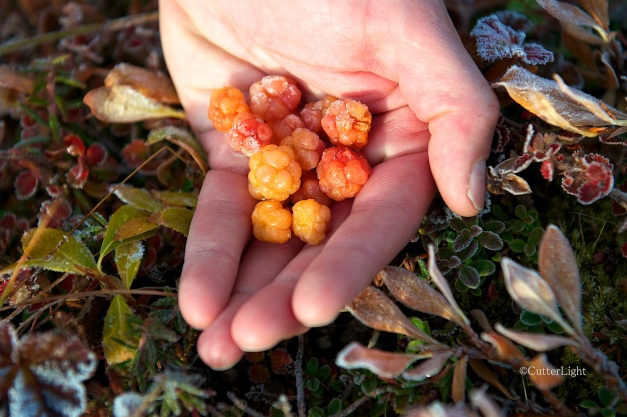 cloudberries frozen in hand n