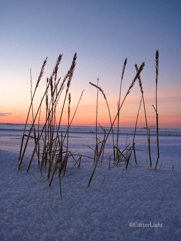 grass snow dawn n