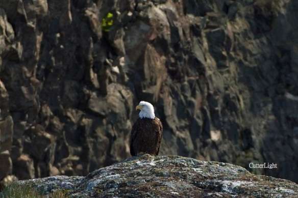eagle on sea rock n