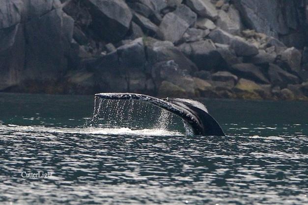 whale tale may 2014 n