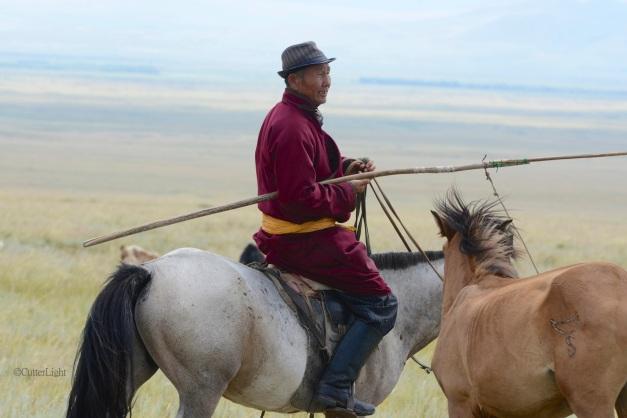 Mongolian herder n