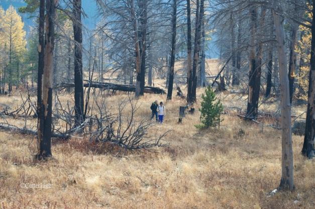 hike through fire-damaged bodkhan n