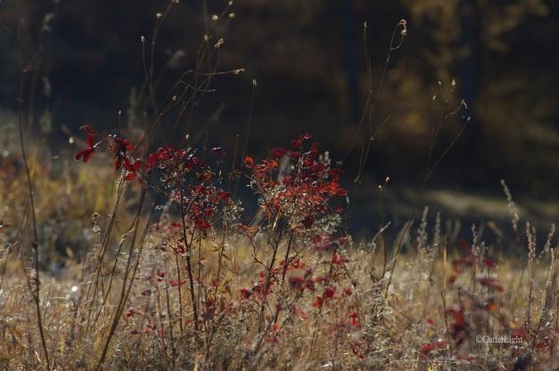Last embers of fall n
