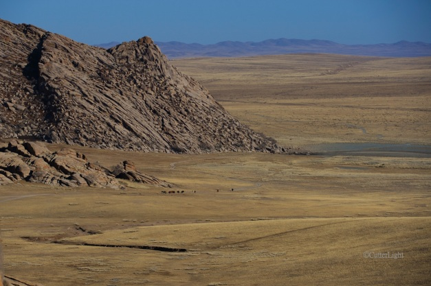 1st ger landscape w cattle n