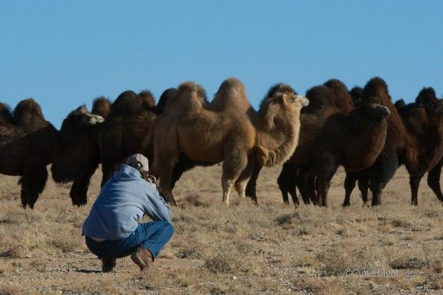 barbra photo camel n