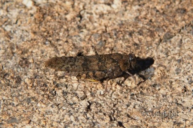 grasshopper_new