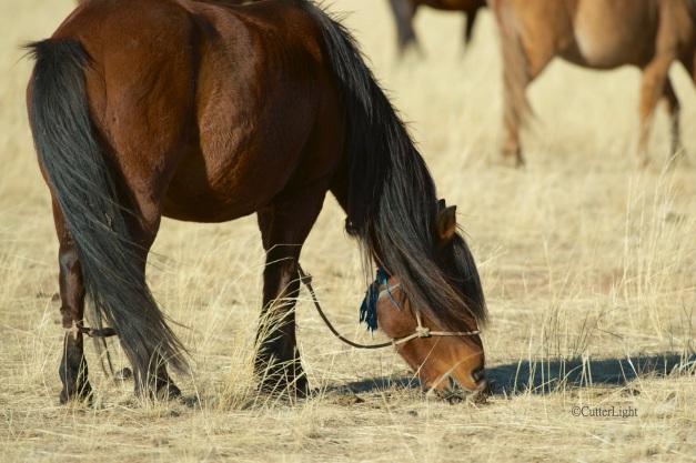 horse with beautiful mane & tail n