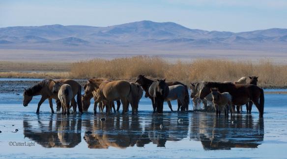 horses in salt lake n