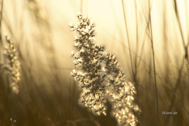 backlit seed head n