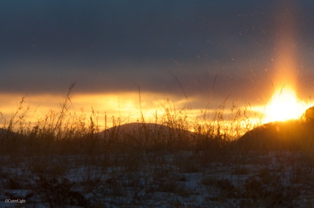 ice needles at dawn n