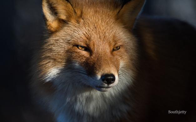 fox-kate-12-30-16-n