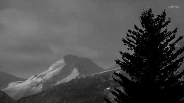 spruce-tree-w-mountain-bw-copy-n