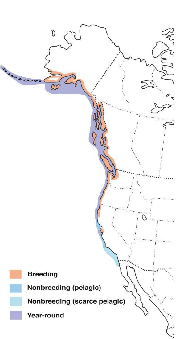 Marbled Murrelet Range Map