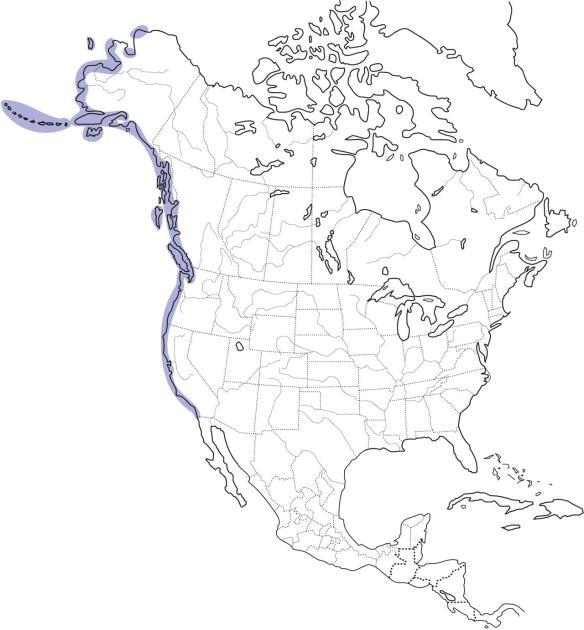 Pigeon Guillemot Range Map