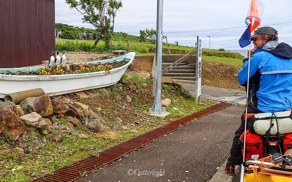 Teuri Island Murres Flowerbed
