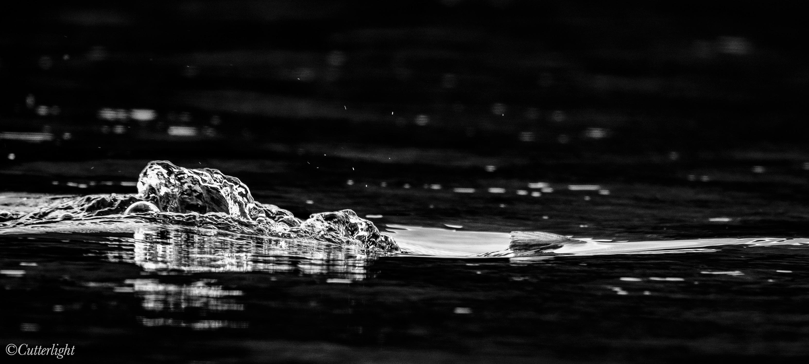 spawning sockeye chignik river alaska